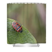Cabbage Shield Bug Shower Curtain