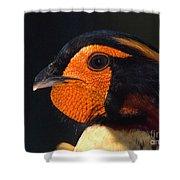 Cabots Tragopan Pheasant Shower Curtain