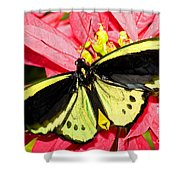 Cairns Birdwing Butterfly Shower Curtain