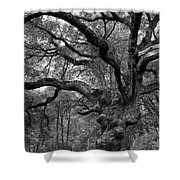 California Black Oak Tree Shower Curtain
