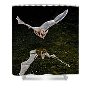 California Leaf-nosed Bat At Pond Shower Curtain