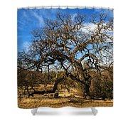 California White Oak Shower Curtain