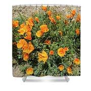Californian Poppy Eschscholzia Shower Curtain