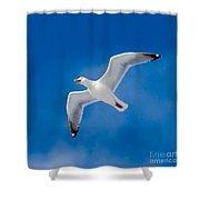 Calling Herring Gull Flying In Blue Sky Shower Curtain