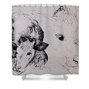 Calves, Gt Garnetts II Pen & Ink On Paper Shower Curtain