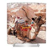 Sitting Camel Shower Curtain
