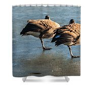 Canada Geese At Rest Shower Curtain