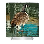 Canadian Goose Shower Curtain