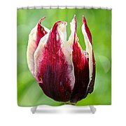 Candy Tulip Shower Curtain
