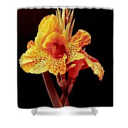 Canna Lilly In New Orleans Shower Curtain