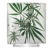 Cannabis  Shower Curtain