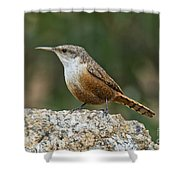 Canyon Wren Shower Curtain