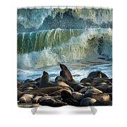 Cape Fur Seals Arctocephalus Pusillus Shower Curtain