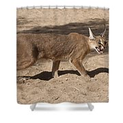Caracal  Shower Curtain