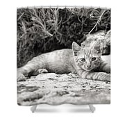 Cat And Lavender  Shower Curtain
