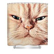 Cat Face Close Up Portrait Shower Curtain