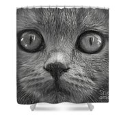 Cat's Eyes Shower Curtain