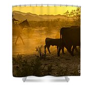 Cattle Drive 6 Shower Curtain