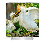 Cattle Egret With Young In Nest Shower Curtain