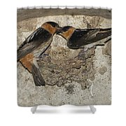 Cave Swallows Shower Curtain