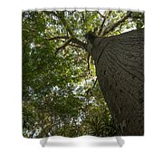 Ceiba Tree Shower Curtain