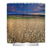 Cereal Fields At Sunset Shower Curtain