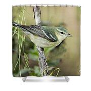 Cerulean Warbler Shower Curtain