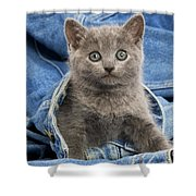 Chartreux Kitten Shower Curtain