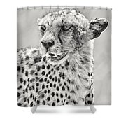 Cheetah Shower Curtain by Adam Romanowicz