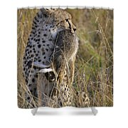 Cheetah Carrying Its Prey Shower Curtain