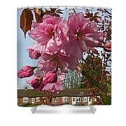 Cherry Blossom Spring Shower Curtain