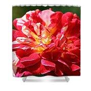 Cherry Petals Shower Curtain