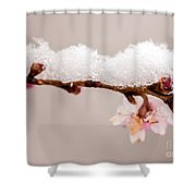 Cherryblossom With Snow Shower Curtain