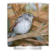 Chestnut-sided Warbler Shower Curtain