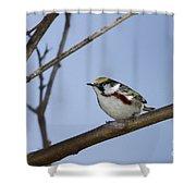 Chestnut Warbler Shower Curtain