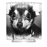 Chi Shower Curtain
