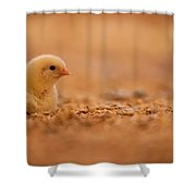 Chick In Poultry Barn Shower Curtain