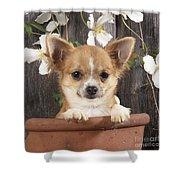 Chihuahua Dog In Flowerpot Shower Curtain