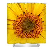 Chipmunk's Peredovik Sunflower Shower Curtain