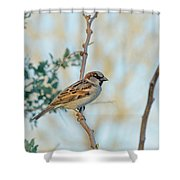 Chipping Sparrow Shower Curtain