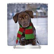 Chocolate Labrador Retriever Shower Curtain