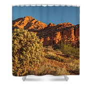 Cholla Cactus And Red Rocks At Sunrise Shower Curtain