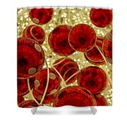 Christmas Decoration Shower Curtain