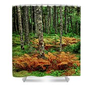 Cinnamon Ferns And Red Spruce Trees Shower Curtain