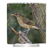 Clay-colored Thrush Shower Curtain