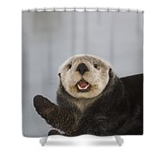 Close Up A Sea Otter In Prince William Shower Curtain
