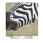 Close-up Of A Burchells Zebra Equus Shower Curtain
