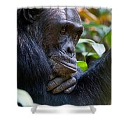 Close-up Of A Chimpanzee Pan Shower Curtain