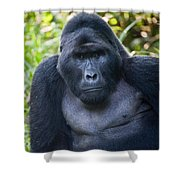 Close-up Of A Mountain Gorilla Gorilla Shower Curtain