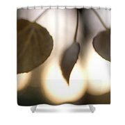 Close-up Of Aspen Leaves In Autumn Shower Curtain